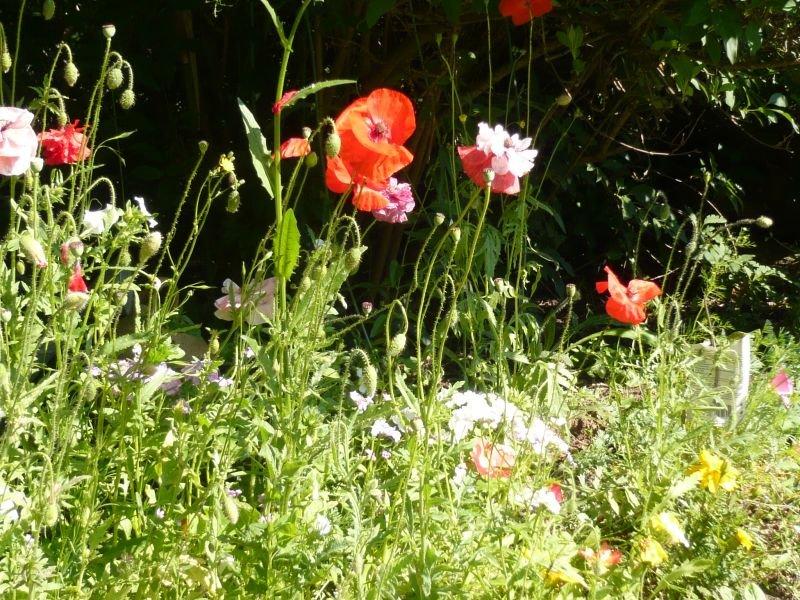 Bienvenue dans mon jardin une fourchette au jardin for Bienvenue dans mon jardin